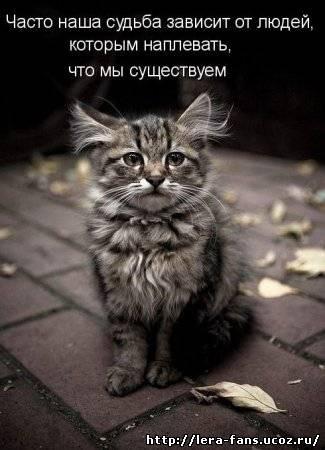 Скачать фото с котенком.