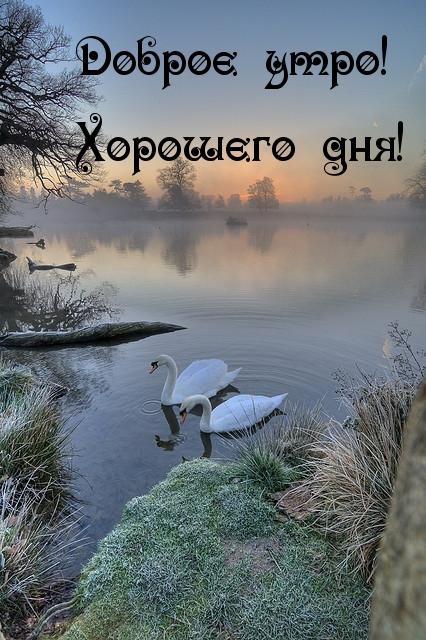 Доброе утро! Хорошего дня!.