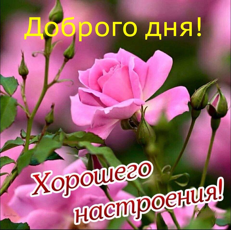 Доброго дня!