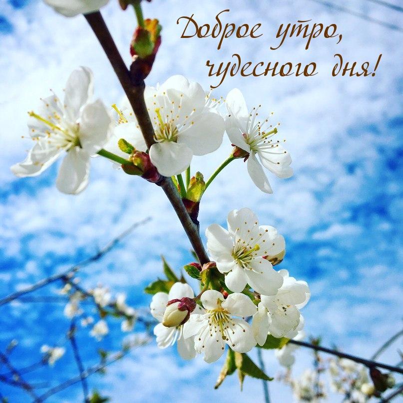 Доброе утро, чудесного дня!